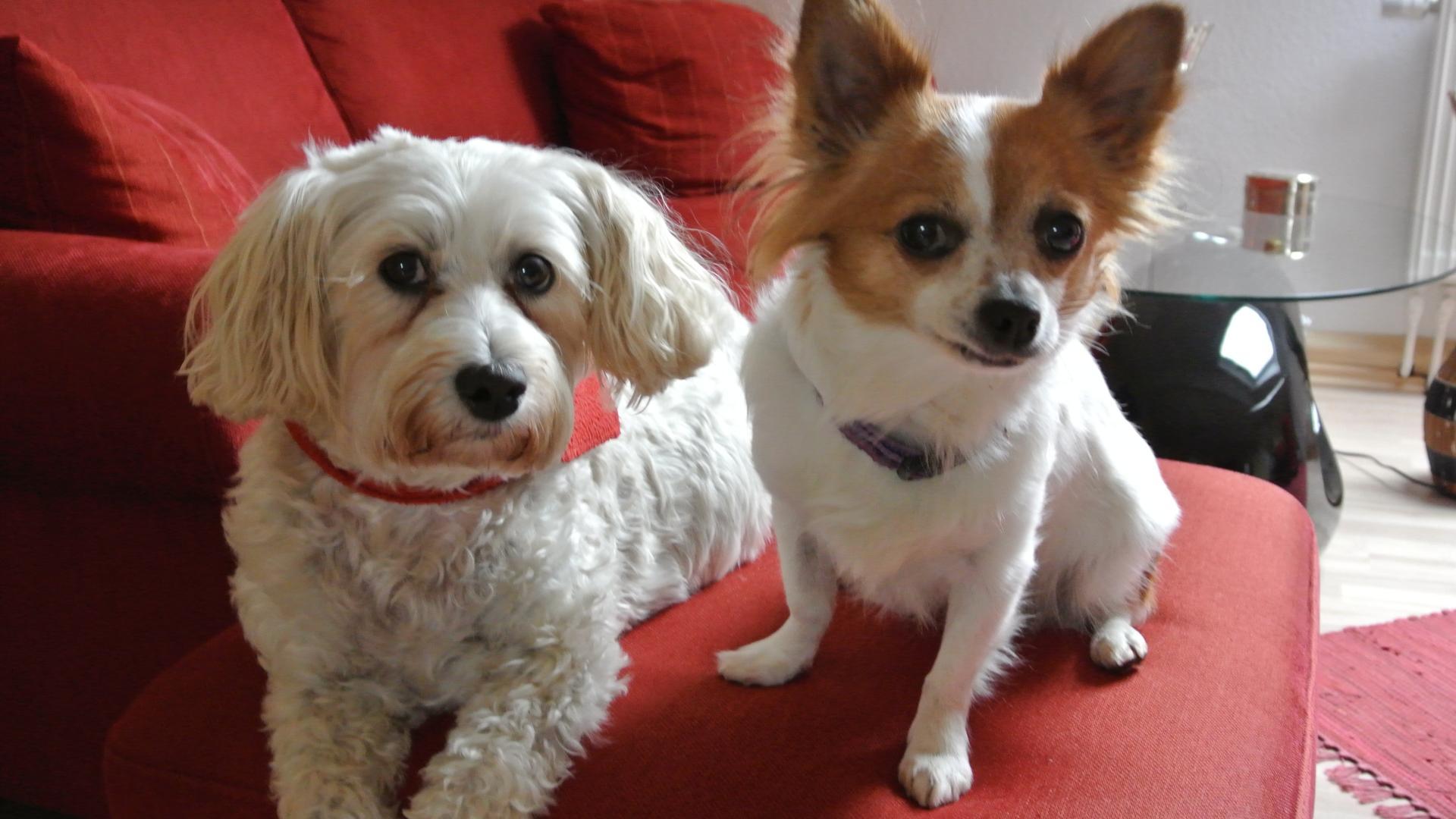 Koppelweide Hunde